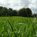 The green grass felt wonderful between your toes on the Great Lawn